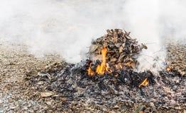 Ожог лист Стоковое Изображение RF