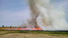 Ожог огня травы предписанный лесным пожаром с пламенами и дымом ( сток-видео