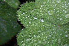 дождевые капли на лист Стоковая Фотография