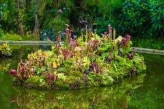 дождевый лес тропический Стоковая Фотография