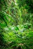 дождь зеленого цвета пущи Стоковое Изображение RF