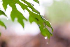 дождь листьев падений зеленый Стоковые Изображения RF