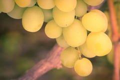 лоза виноградин зеленая Белый плодоовощ виноградин таблицы Стоковое Фото