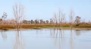 Озера Австралия Menindee деревьев Mystrious мертвые Стоковые Фотографии RF