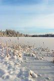 Озера зим стоковые изображения rf