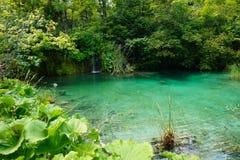 Озера национальная Парк-Хорватия Plitvice Красивый пруд на солнечном после полудня лета стоковые фото