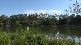 Озера Спрингфилд в городе Ипсвич, Квинсленде, Австралии акции видеоматериалы