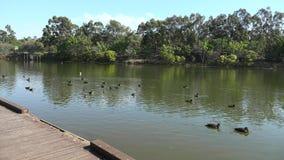 Озера Спрингфилд в городе Ипсвич, Квинсленде, Австралии видеоматериал