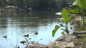 Озера Спрингфилд в городе Ипсвич, Квинсленде, Австралии сток-видео