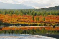 Озера Altai Стоковая Фотография