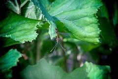 Озера Plitvice Dragonfly Стоковое Изображение