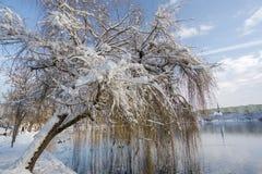 озером Стоковое Изображение RF