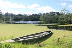 Озеро Амазонк Стоковая Фотография RF