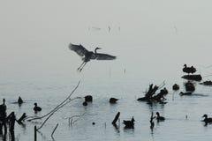 Озеро Ана Sagar в Ajmer Стоковая Фотография