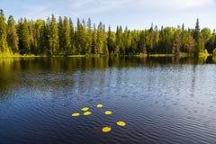 Озеро ландшафта лета одичалое на острове Valaam стоковые фотографии rf