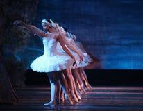 озеро балета выполнило королевского русского лебедя Стоковое Фото