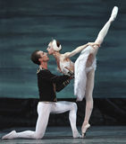озеро балета выполнило королевского русского лебедя Стоковые Изображения RF