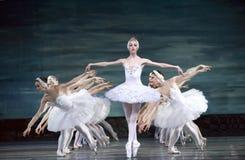 озеро балета выполняет королевского русского лебедя Стоковые Фотографии RF