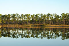 озеро болотистых низменностей стоковая фотография