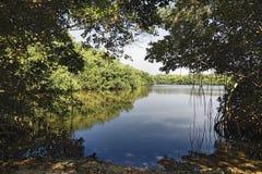 озеро болотистых низменностей Стоковые Фотографии RF