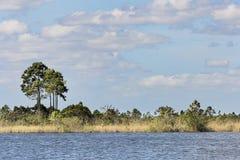 Озеро болотистая низменность Стоковое Изображение RF