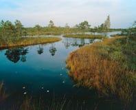 Озеро болот Стоковая Фотография