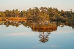 Озеро болот Стоковые Изображения RF