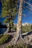 Озеро 2 больших деревья и горы Айдахо Стоковые Фотографии RF