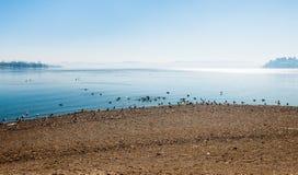 Озеро Варезе, Gavirate Стоковое Изображение RF