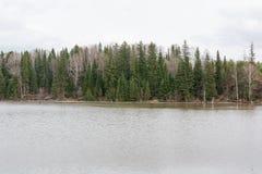 Озеро весной Резервуар весны Место Turestichesky красивейшая природа Большое озеро леса Стоковая Фотография RF