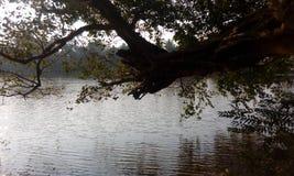 озеро все еще стоковое фото