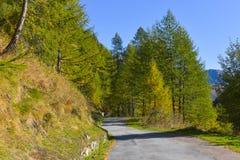 озеро в высоком mountainsYellow и зеленых лиственницах, в высоком mountainsroad которое бежит через лес осени стоковое фото