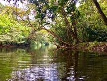 Озеро в лесе от konni в Керале стоковые фотографии rf