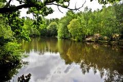 Озеро в лесе Стоковые Фото