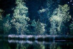 Озеро в лесе стоковая фотография