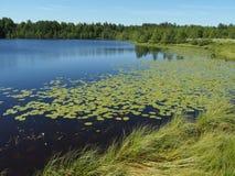 Озеро в лете стоковое изображение