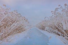 Озеро в зиме стоковое фото rf