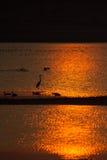 Озеро в золотом заходе солнца с утками и другими птицами заболоченного места Стоковое Фото