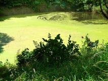 Озеро в лесе Стоковое Изображение