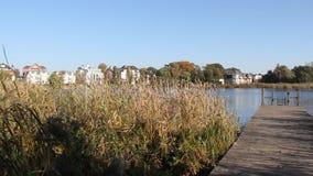 Озеро в осени с деревянным мостом видеоматериал