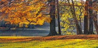 Озеро в парке в осени. Парк в осени. Стоковое Изображение