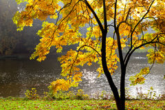Озеро в парке в осени. стоковое фото rf