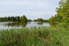 Озеро в парке города Стоковая Фотография RF