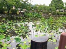 Озеро в парке с пусковыми площадками лилии Стоковая Фотография RF