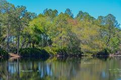 Озеро в парке Hillsborough County Flatwoods, Флориде Стоковое фото RF