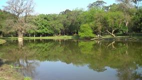 Озеро в пуще сток-видео