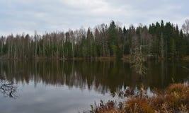 Озеро в пуще Стоковая Фотография