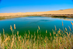 Озеро в середине пустыни стоковая фотография