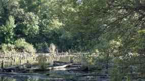 Озеро в Харькове, Украине стоковая фотография