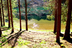 Озеро в forset стоковое изображение